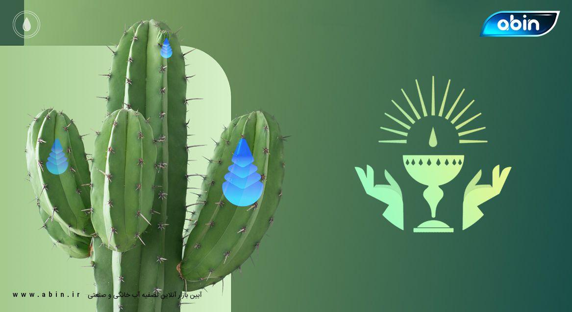 10 گیاه کم آب در دنیا